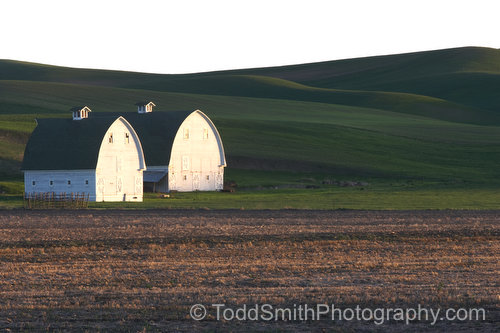 Two barns in the evening light