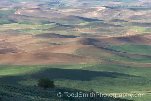 Rolling hills from Steptoe Butte, WA