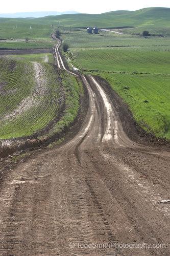 A dirt farming road in southeastern Washington