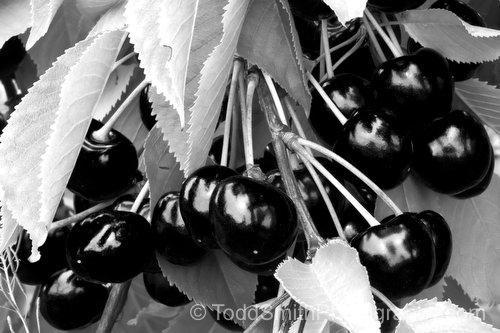 Black and White photo of cherries