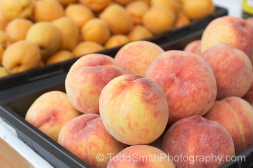 Peaches and Apricots Ready to Sell