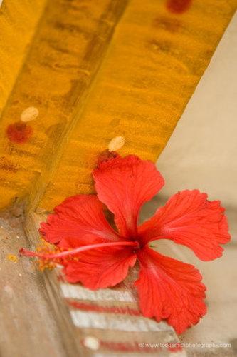 Hibiscus flower on an Indian doorsill