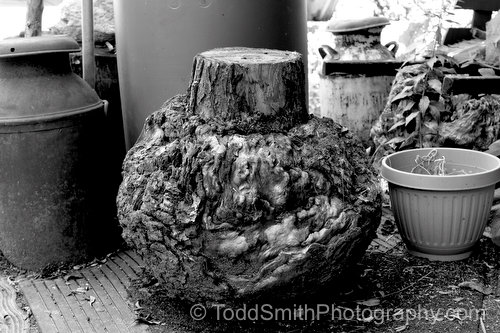 A burl outside Dustin Coates' studio
