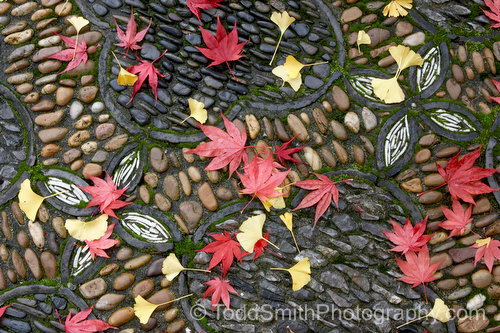 Leaves on the mosaic patio of Dr. Sun Yat-Sen Classical Chinese Garden