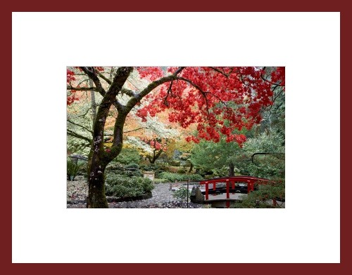 framed print of japanese maple and bridge