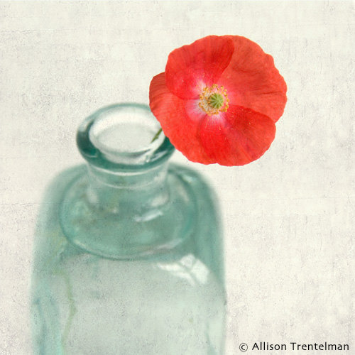 red poppy wall art by allison trentelman